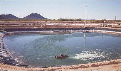 Mikroalge-biofiksering