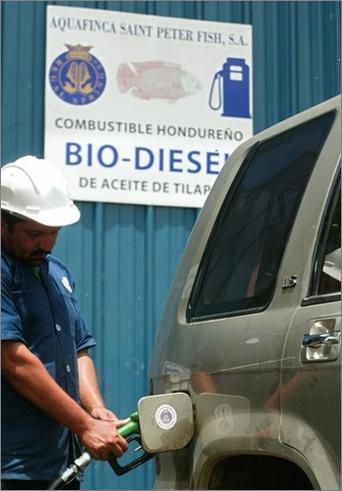 Tilapia-diesel